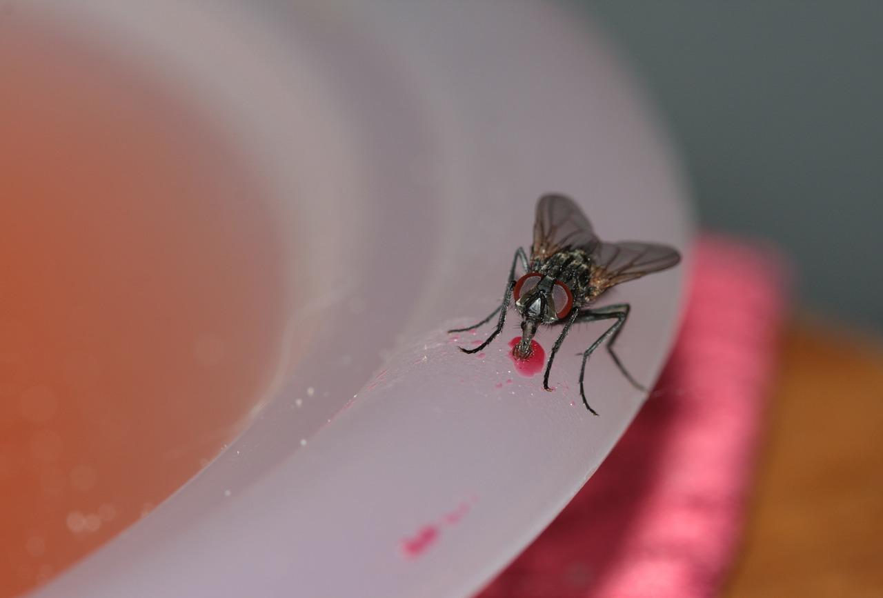 Que faire contre les mouches ?